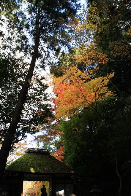 山門と紅葉.jpg
