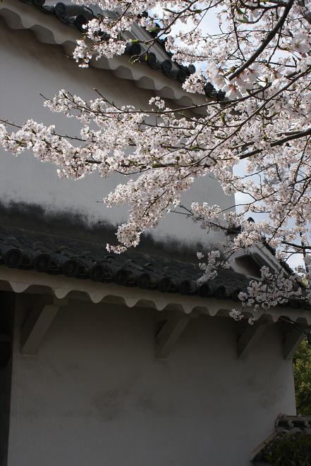 桜と白壁.jpg
