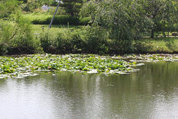 水辺の風景.JPG
