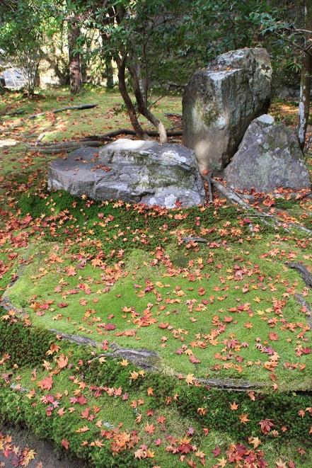 苔と紅葉.jpg