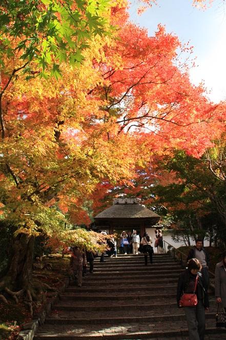 門前の紅葉.jpg