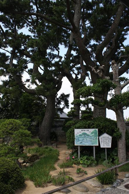 鶴亀の庭.jpg