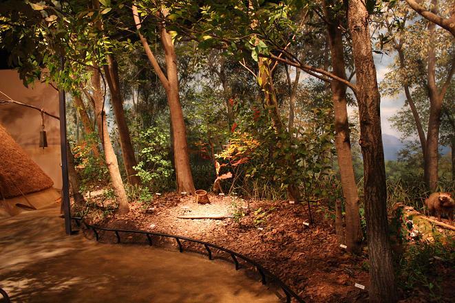 縄文の森.jpg