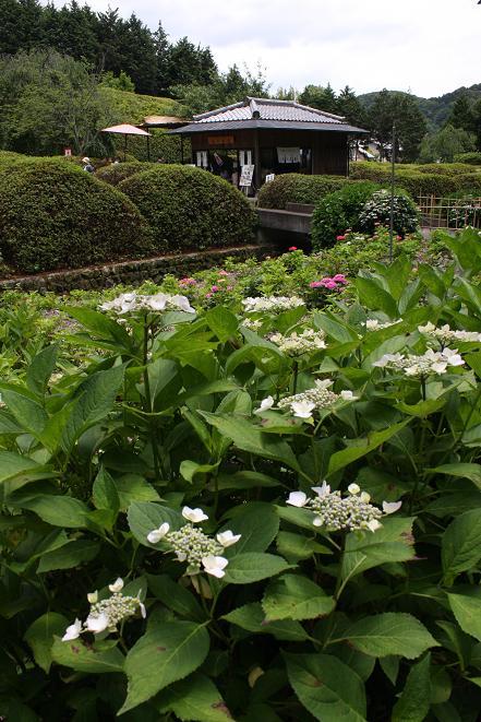 花の茶屋.jpg